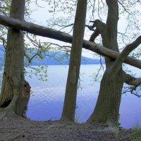 Утро на озере :: Михаил Свищёв