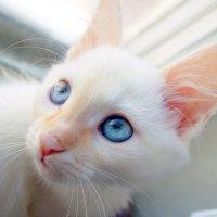 кошка :: Yunna _____