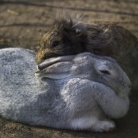 Кроличья любовь ))) :: Юля Колосова
