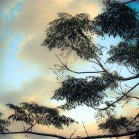 деревья в небесах1 :: Ольга