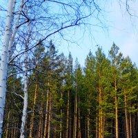 Вестники забайкальской весны :: Елена Фалилеева-Диомидова