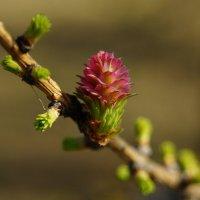 Весна идет :: Andy Bayt