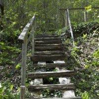 Мост в лесу :: Евгения Курицына