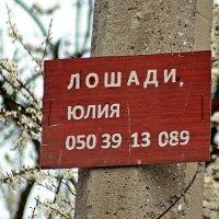 богатый выбор :: Александр Корчемный