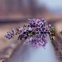 первые цветы :: Аксана Еськина