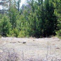 Весна в лесу :: alemigun