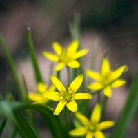 весна :: Peteris Kalmuks