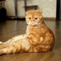 Задумчивый кот :: Elena Moskina
