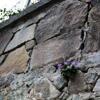 И на камнях растут цветы :: Татьяна Старчикова