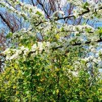 Весеннее разноцветье :: Люша