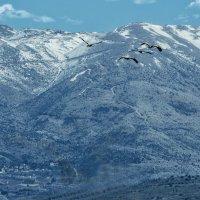 Зима на горе Хермон :: klara Нейкова