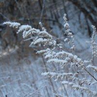 Вся в снегу. :: Олег Афанасьевич Сергеев