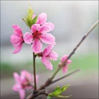 Весна ... :: Александр Л......