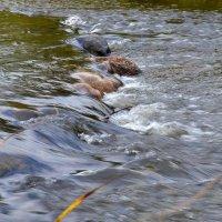 Шум воды :: Владимир Рязанов