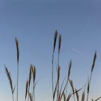 травы, травы :: Galina