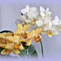 Второй месяц цветут. :: Валерия Комова
