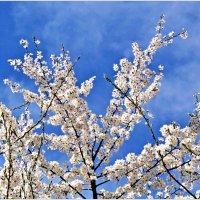 Весна. :: Валерия Комова