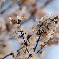 Весна в Волгограде :: Илья