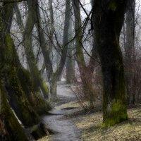 Весенние тропы.... :: Юрий Цыплятников