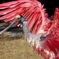 Розовый ангел :: Alexander Andronik