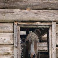 Лошадь в окне :: Надежда Преминина