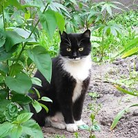 Мама - кошка :: Маргарита Батырева