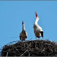 начало... :: linnud