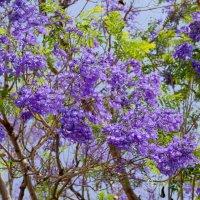 фиолетовое дерево :: Александр Деревяшкин