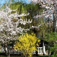 В апреле на Пушкинском бульваре... :: Тамара (st.tamara)