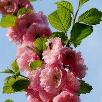 Привет весне... :: Тамара (st.tamara)
