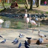 Фламинго под надежной охраной :: Ростислав