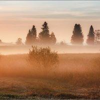 Утро, туманное... :: Александр Никитинский
