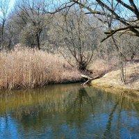 Наполнились водой весенние ручьи :: Милешкин Владимир Алексеевич