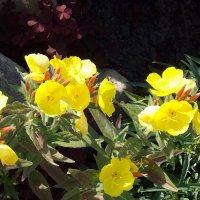 """""""Альпийская горка"""" :: Фотогруппа Весна."""