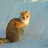 Рыжик, чей ты? :: Ольга Алеева