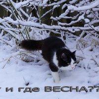 ..... :: александр дмитриев