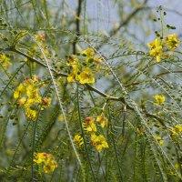 Желтые цветы :: Александр Деревяшкин