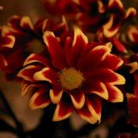Аленький цветочек. :: Леонид Марголис
