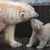 Nsk zoo :: Alexey Romanenko