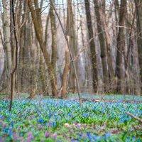 Весенний лес :: Roman Rez