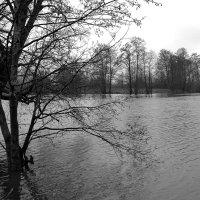 Разлив на озере Глубоком :: Андрей Зайцев