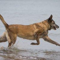 Ура! Море! :: Виталий Латышонок