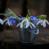Первоцветы :: Евгения Иванова