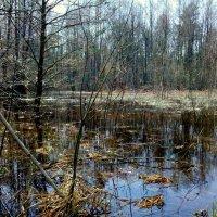 весенний лес :: Александр Прокудин