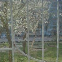 За моим окошком - цветущий апрель :: Нина Корешкова