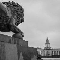 Львы Адмиралтейской набережной :: Павел Федоров