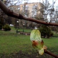Пробуждение весны :) :: 고토 랜