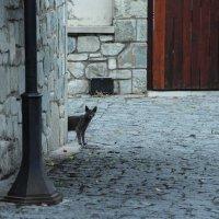 Испанская кошка. :: Larisa Gavlovskaya