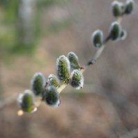 Вот она пришла Весна... :: Сергей Адигамов