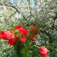 Красно-белый цвет весны... :: Алекс Аро Аро